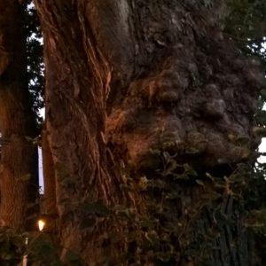 Unser zauberhaftes Baumwesen Frau Linde